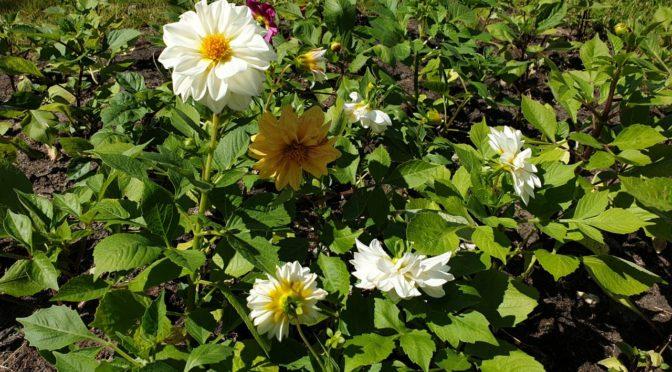 Благодарим за участие в благоукрашении территории нашего храма живыми цветами